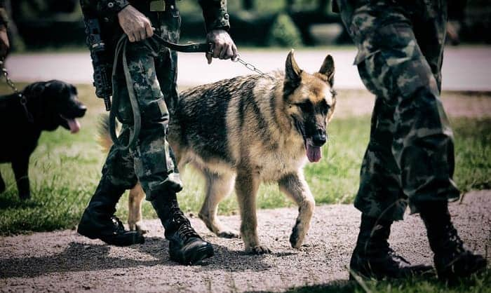 a-military-dog-trainer