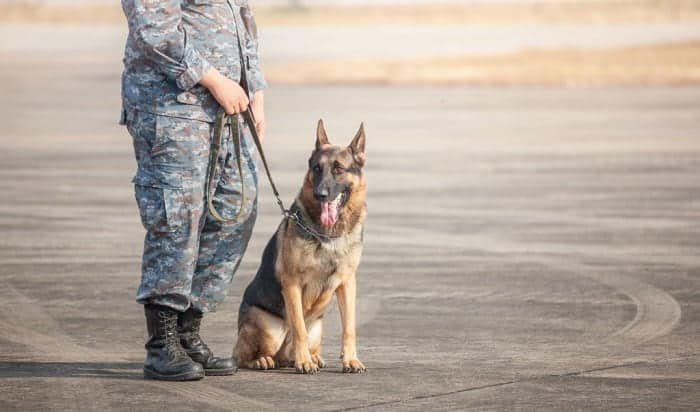 army-dog-handler-requirements